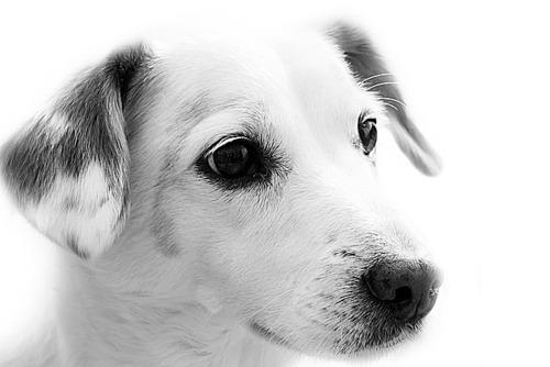 Pet-Dog Trust North Dakota