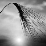 Farmland & Divorce In North Dakota